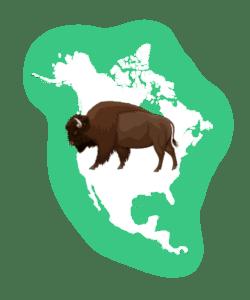 Bison over North America